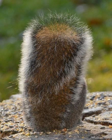 GraySquirrel10Dec15#1990E2c8x10