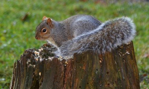 GraySquirrel10Dec15#1993E2c3x5