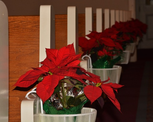 Poinsettias21Dec15#2106E5c8x10