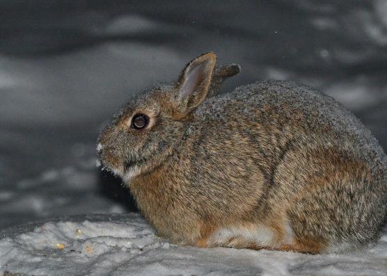 Bunny18Jan16#3592E2c4x6