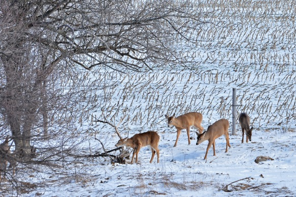 Deer27Feb16#5933E2c4x6