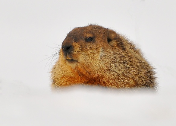 Groundhog27Mar13#059E4c5x7