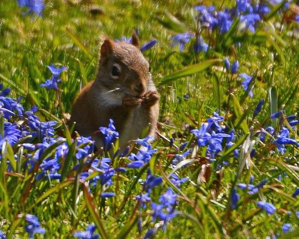 RedSquirrelStub30Mar16#7735E3c8x10