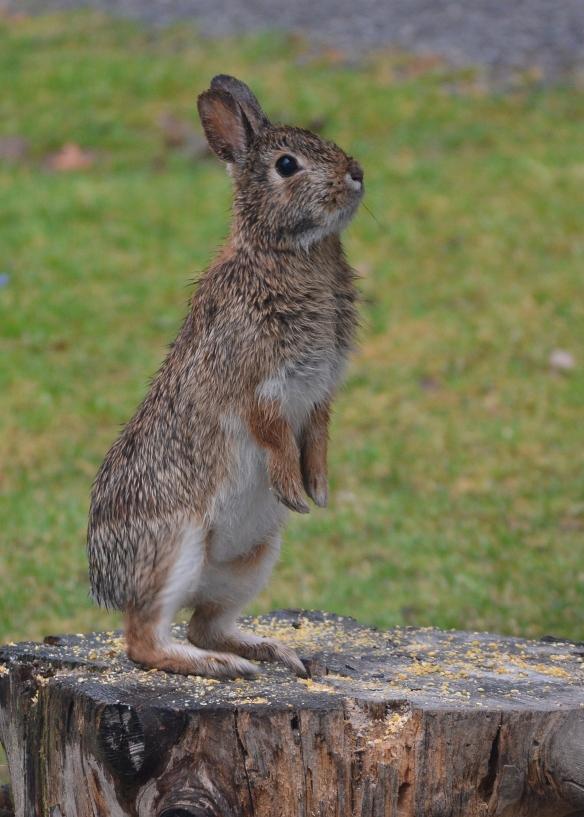 Bunny1Apr16#7878E5c5x7