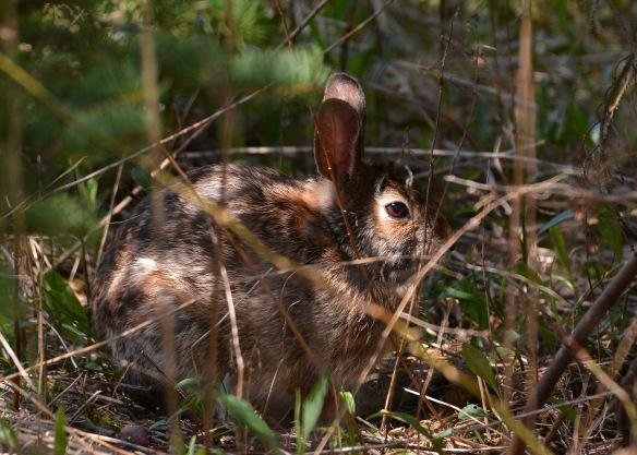 Bunny12May16#0591E2c5x7