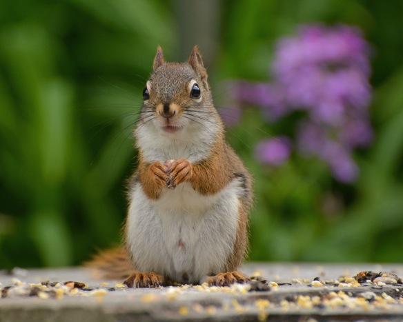 RedSquirrelJv11June16#0112E2c5x7