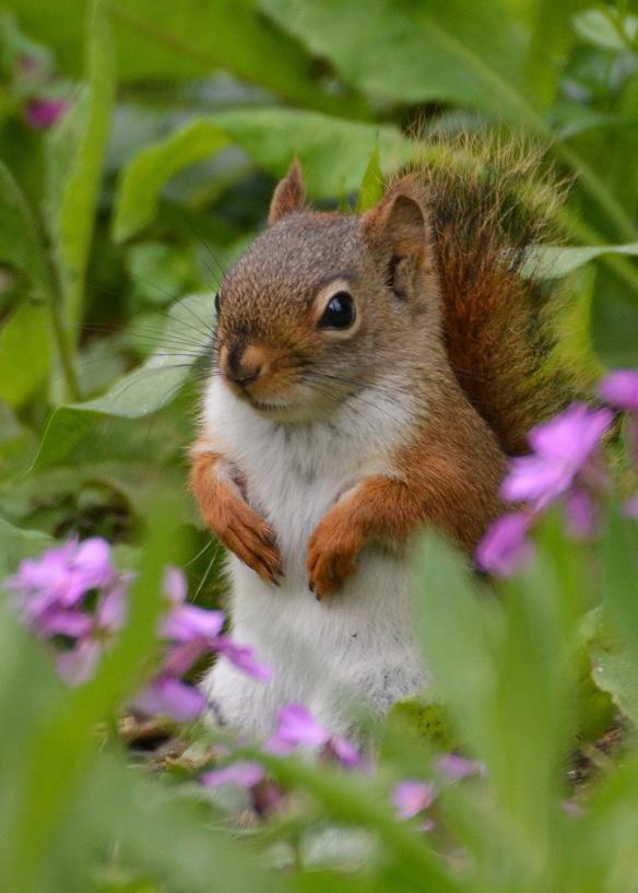 RedSquirrelJv13June16#0191E2c5x7