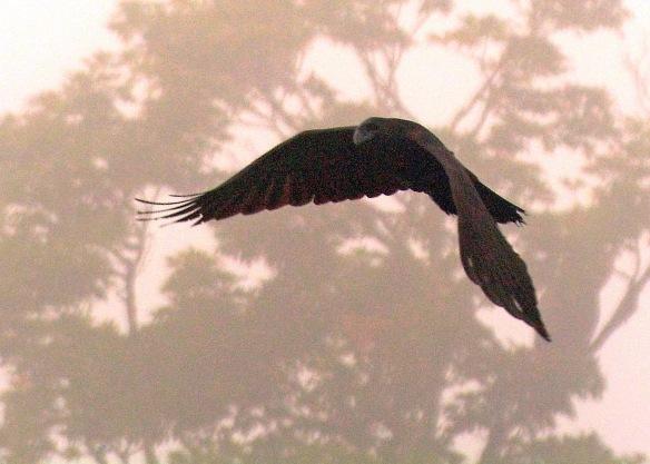 crow27sept165654e2c5x7