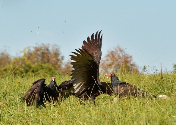 vultures28sept165875e2c5x7