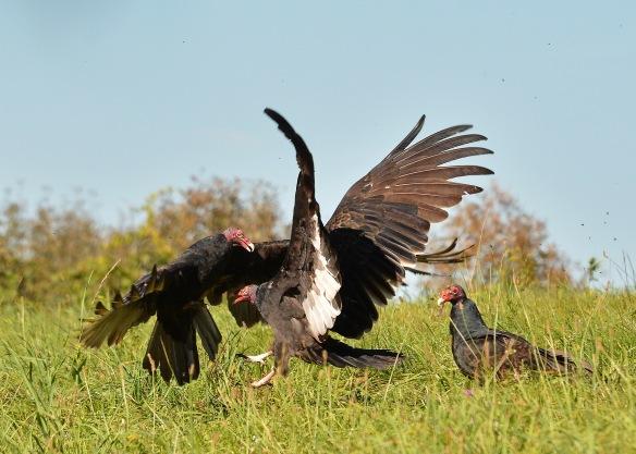 vultures28sept165877e2c5x7