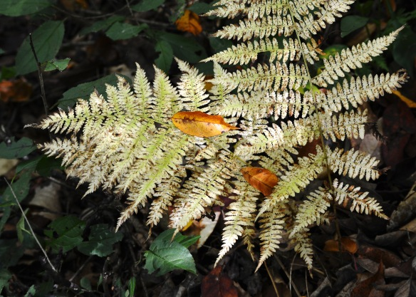 ferns5oct166151e3c5x7_edited-1