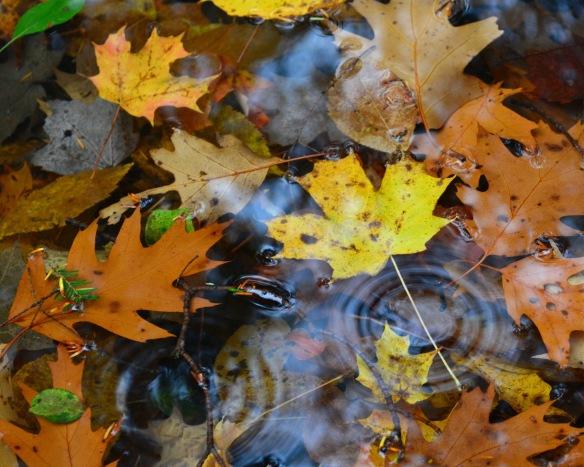 leavespuddle28oct167449e2c8x10