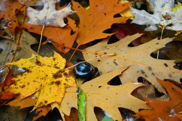 leavespuddle28oct167460e2c4x6