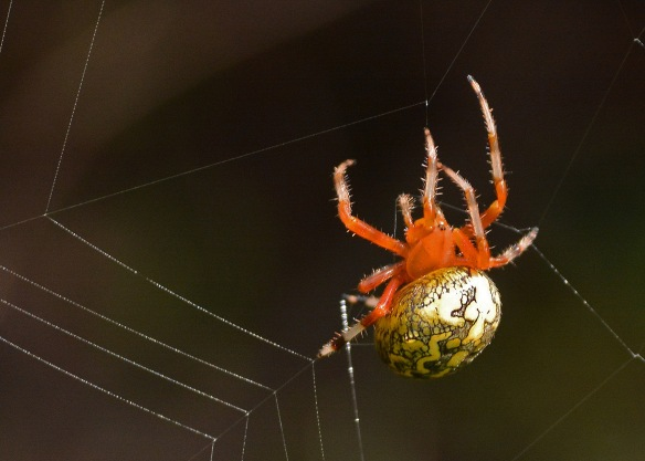 spider3oct166039e2c5x7