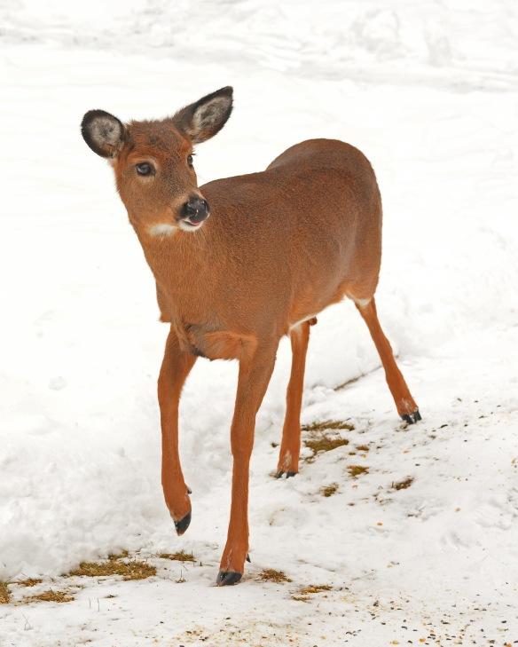 deer11feb170571e2c8x10
