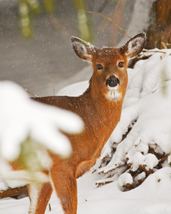 deer12feb170694e3c8x10