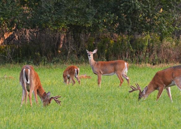 Deer30Aug17#2765E9c5x7