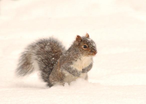 GraySquirrel25Dec17#6731E2c5x7