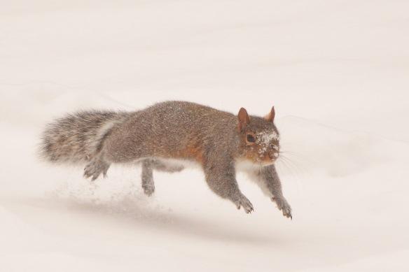 GraySquirrel25Dec17#6756E2c4x6