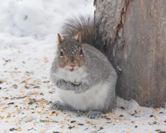 GraySquirrel26Dec17#6866E2c8x10