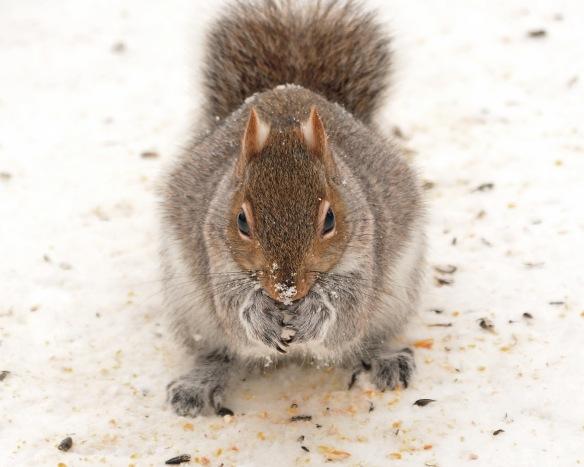 GraySquirrel30Dec17#7225E5c8x10