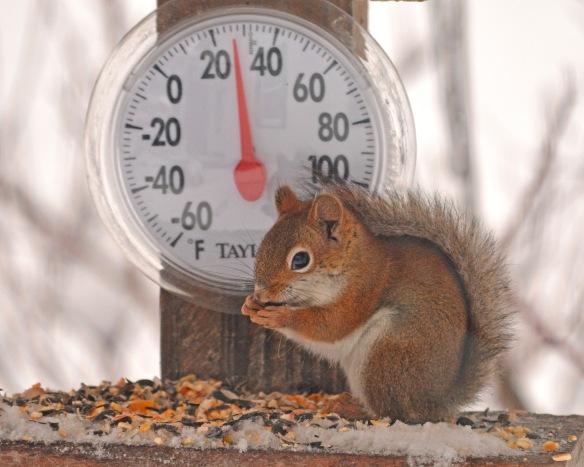 redSquirrel12Dec17#6325E2c8x10