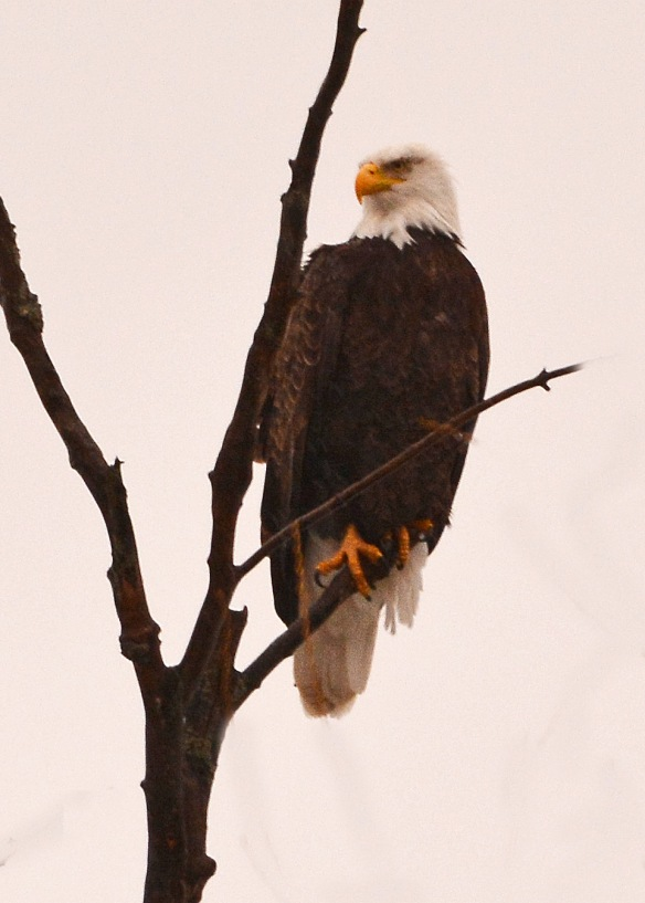 Eagle19Feb18#9473E5c5x7
