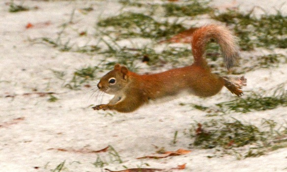 RedSquirrel22Feb18#9615E2c3x5