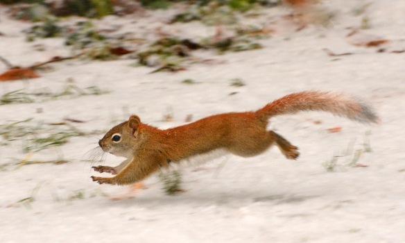 RedSquirrel22Feb18#9680E2c3x5