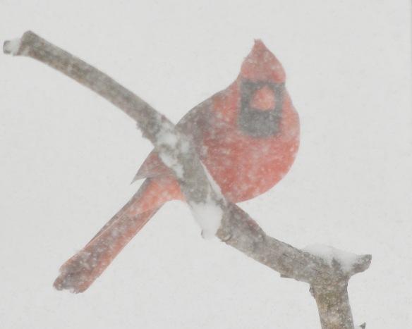 Cardinal2Mar18#9893E2c8x10