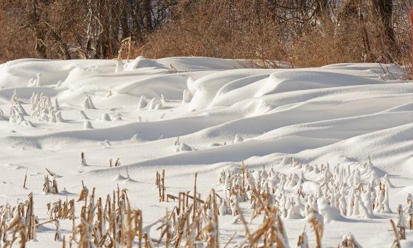snowdrift12jan19#2990e2c3x5